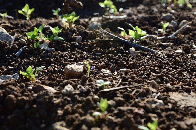 pěstování na zahrádce