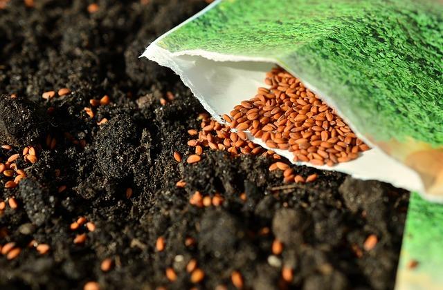sázení semínek