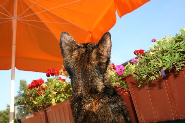 kočka pod slunečníkem