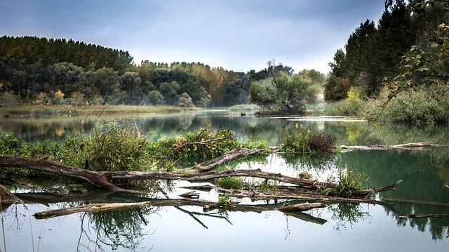větve v řece