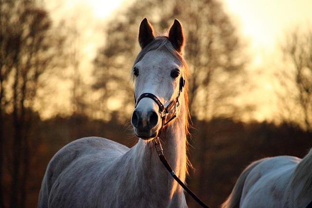 Kůň s ohlávkou
